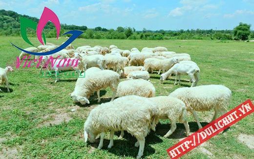 Tour Du Lịch Đồi Cừu Long Hải 2 ngày 1 đêm