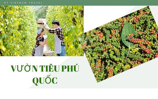Tour Tây Ninh đi Phú Quốc 3 ngày 3 đêm